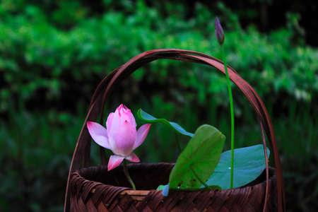 seedpod: Lotus flower Stock Photo