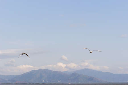 Seagulls flying under the blue sky Stock Photo - 76659924