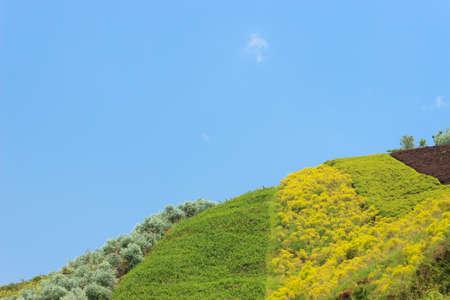 source of light: Grass, trees, blue sky