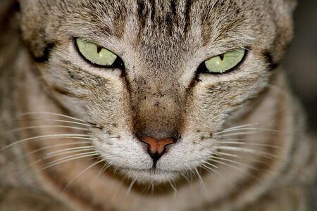 A close-up view of a beautiful cat. Фото со стока