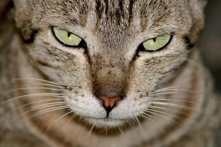 Una vista de primer plano de un hermoso gato. Foto de archivo