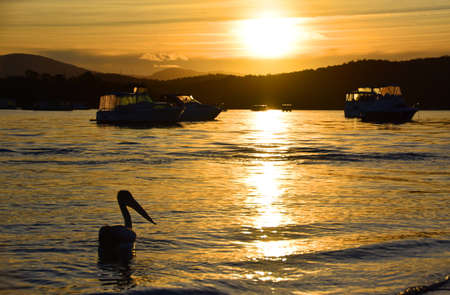 Pelican at Sunset Stock Photo
