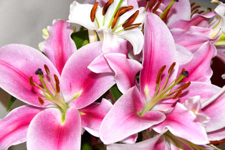 Lilies and Snapdragons