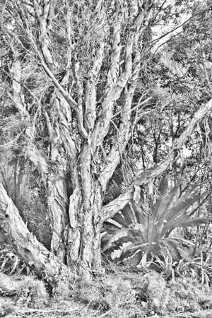 Artistic Paperbark Tree