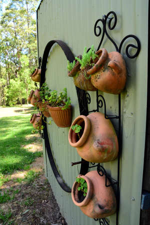 Pot plants hanging on a wall