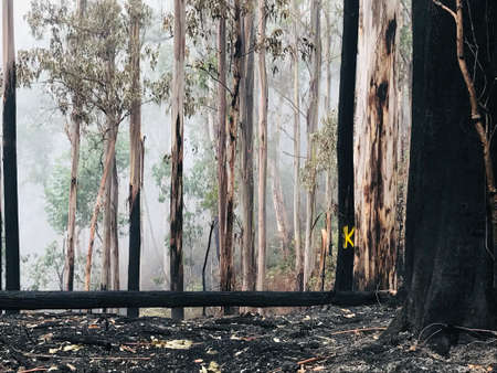 Australian outback post-bushfire with a yellow K on a tree, meaning Killer Tree - a tree that will fall imminently.