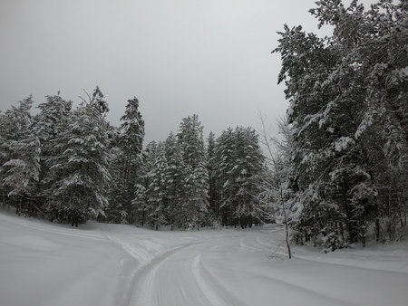 winter forest. Road in the woods in winter.