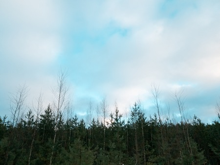 The trees in the forest. Clouds over the forest in winter. Standard-Bild