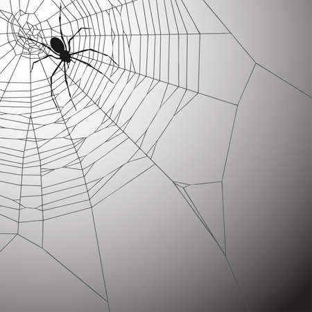 A Spiderweb Vector Illustration with Spider Vector
