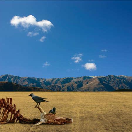 karkas: Een liggend woestijn met karkas en Birds