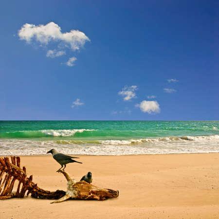 carcasse: Une plage de la carcasse et les oiseaux