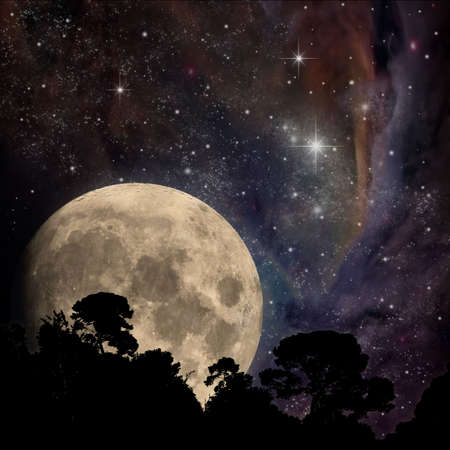 A Night Sky with Moon and Trees Stock Photo - 7313530