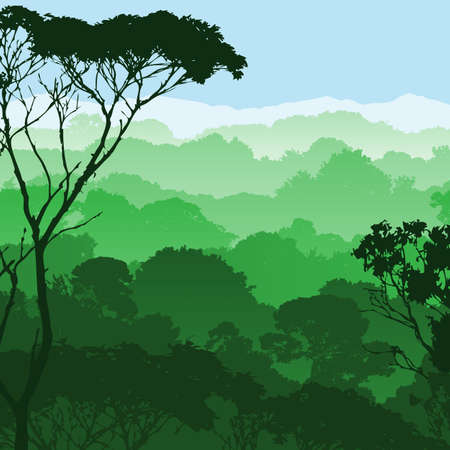 rainforest tree: A Green Forest Landscape Trees