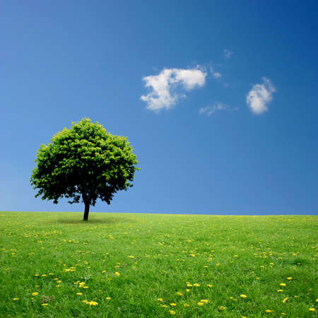 solitude: A Single Tree Standing Alone with Blue Sky and Grass