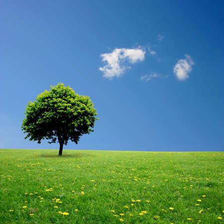 paisaje rural: Un único árbol permanente solo con cielo azul y el césped