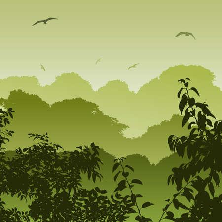 selva: Un paisaje de bosque verde con �rboles