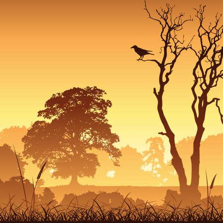paisaje rural: Un país Meadow paisaje con árboles y aves