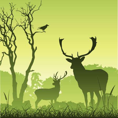 Ciervo de ciervo macho en un prado con árboles y aves