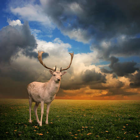 Male Stag Deer on a Meadow Stock Photo - 8588664