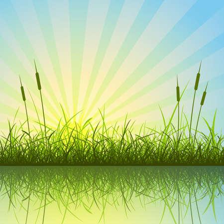 rietkraag: Gras en riet met weerspiegeling in Water Stock Illustratie