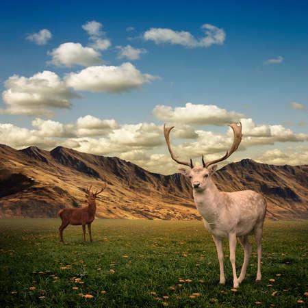 alce: Due cervi cervo maschio su un prato Archivio Fotografico