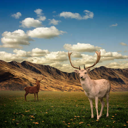 stag: Two Male Stag Deer on a Meadow Stock Photo