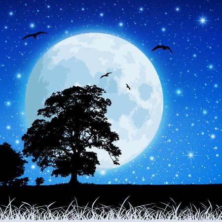 ¡rboles con pajaros: Un paisaje de pradera del país con la Luna y el cielo nocturno Vectores