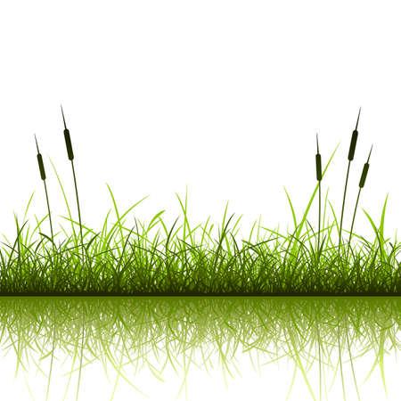 Gras en riet met reflectie in het water