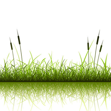 Grass and Reeds with Reflection in Water Stock Vector - 10069907
