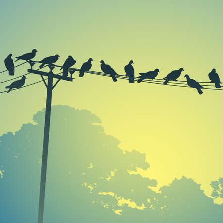 bandada pajaros: Gran cantidad de aves en líneas telefónicas