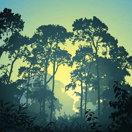 foresta: Un paesaggio forestale con alberi e Tramonto Alba