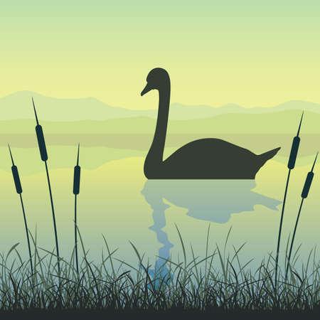 reflectie water: Een Swan on Water met riet en gras Stock Illustratie