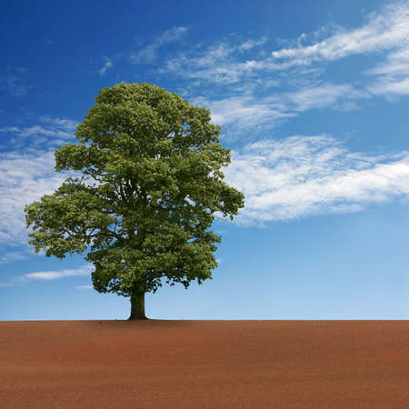 A Single Tree Standing Alone in Field with Blue Sky photo