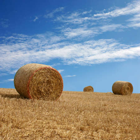 Straw Bales on Farmland with Blue Sky photo
