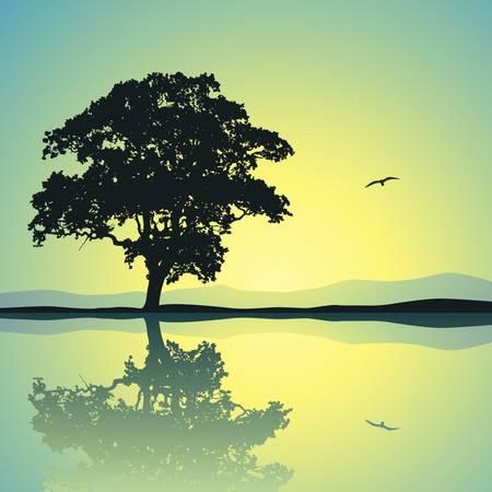 reflectie water: Een Single Tree Standing Alone met reflectie in het water
