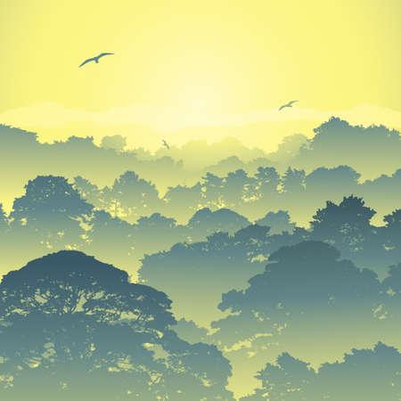 Een Misty Forest Landschap met Bomen en Zonsondergang, Zonsopgang