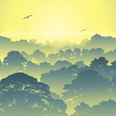 A Misty Forest Landscape with Trees and Sunset, Sunrise