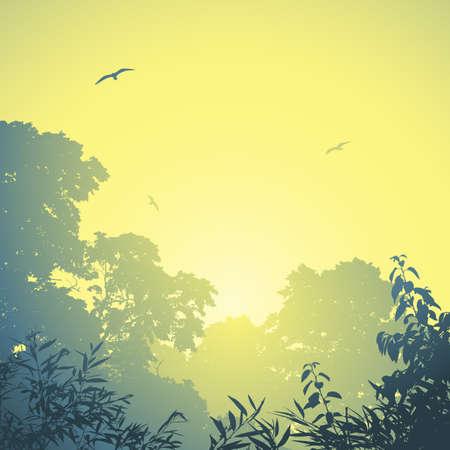 misty forest: Un paisaje del bosque brumoso con los �rboles y la puesta del sol, salida del sol