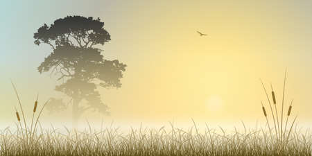 canne: A Sunrise Misty, Paesaggio Tramonto con albero e Ance