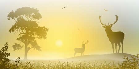 misty forest: Deer Ciervo macho en un prado brumoso con el �rbol y la puesta del sol, salida del sol