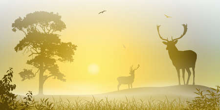 Male Stag Deer on a Misty Meadow with Tree and Sunset, Sunrise Vector