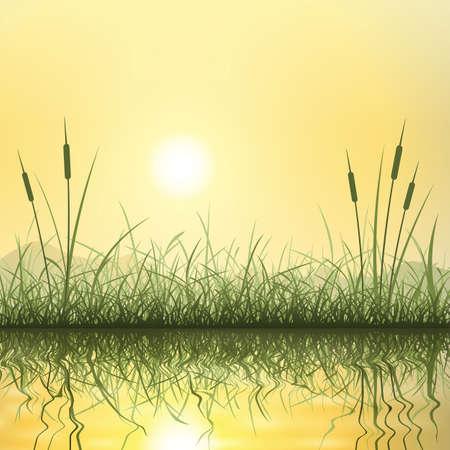 canne: Erba e canne con la riflessione in acqua