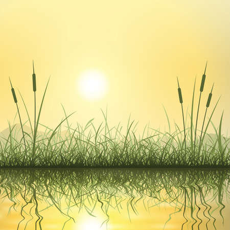 Grass and Reeds with Reflection in Water Vector