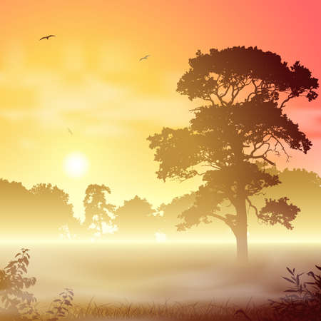 A Misty Forest Landscape with Trees and Sunset, Sunrise Vector