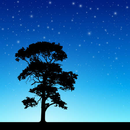 trees silhouette: Lone Tree in Silhouette with Night Sky and Stars -
