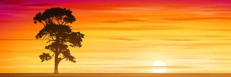 lone: A Lone Tree with Misty Sunset, Sunrise.