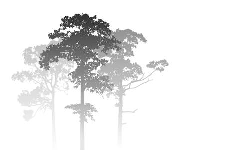fog forest: A White Misty Forest Landscape with Trees