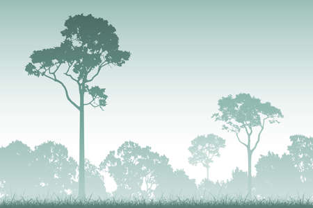 misty forest: A Misty Forest Landscape with Trees Illustration