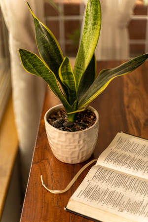 An open bible next to a window with a house plant on a wooden table next to a window
