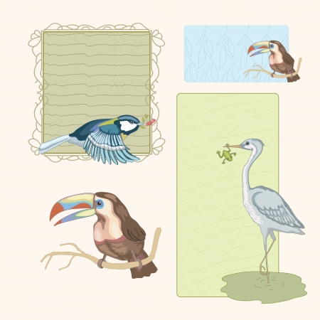 bog: Various bright birds and nice frame